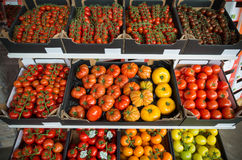 Boxes with colorful tomatoes Stock Photo