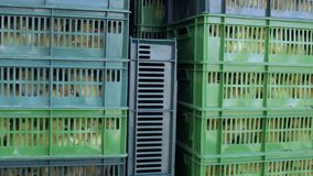 Boxes with ducklings prepare to transportation. A lot of ducklings in boxes. The birds prepared to transportation. Plastic boxes with little ducks inside the stock video