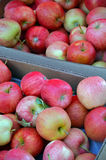 Boxes of fresh apples Stock Image
