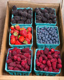Boxes of fresh berries just picked at the market Stock Photo