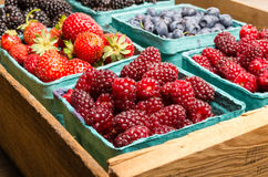 Boxes of fresh berries just picked at the market Stock Photography