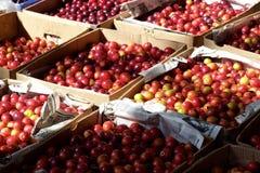 Boxes of fresh Prunus cerasifera, cherry plum, in Tbilisi, Georgia Royalty Free Stock Images