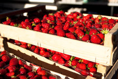 Boxes of fresh strawberries on the market Royalty Free Stock Photography