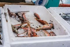 Boxes of freshly caught fish on a fishermen boat. Styrofoam boxes of tiny freshly caught fish on a fishermen boat in Zakynthos Port, Zakynthos City, Ionian royalty free stock image