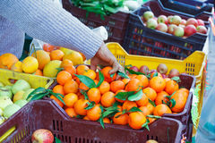 Boxes of fruit to the market Stock Images