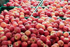 Apples at the market stock images