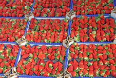 Boxes full of juicy red strawberries and sold at local market Royalty Free Stock Image