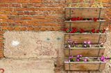 Boxes with garden flowers Royalty Free Stock Photography