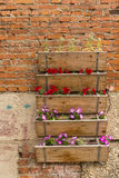 Boxes with garden flowers Stock Image