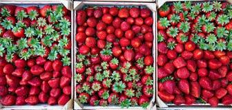 boxes jordgubbar fotografering för bildbyråer
