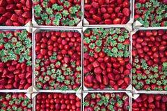 boxes jordgubbar arkivbilder