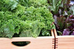 Boxes of Lettuce Stock Image