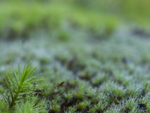 Moss on a bright green background Stock Images