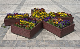 Boxes with pansies on the pavement Stock Photos