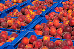 Boxes of peach in summer, harvest. Boxes of red  peach in summer, harvest Royalty Free Stock Images