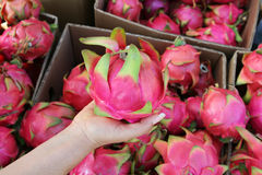 Boxes of pink Dragon fruit stock images
