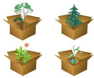 Boxes with plants Royalty Free Stock Photos