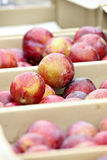Boxes of Plums Stock Images