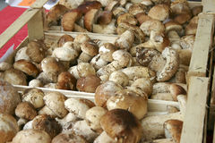 Boxes with porcini mushrooms Stock Images
