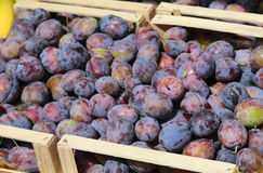 Boxes of purple plums for sale at vegetable market Royalty Free Stock Photography