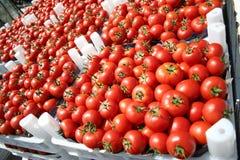 boxes röda mogna tometoes Arkivfoto