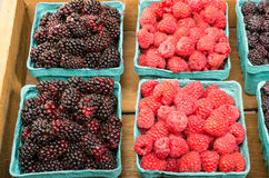 Boxes of red raspberries and marionberries. Freshly picked boxes of Marionberries and Red Raspberries on display Stock Images