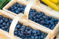 Boxes of ripe blueberries Stock Images
