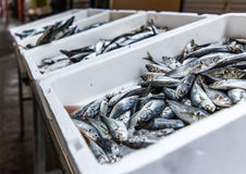 Boxes of sardines Royalty Free Stock Photography