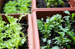 Boxes with seedling. Close up Stock Photography