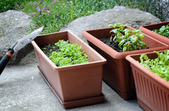 Boxes with seedling Royalty Free Stock Images
