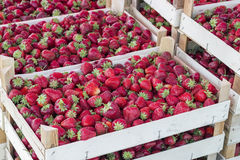 Boxes of strawberries in farmer market Stock Photos
