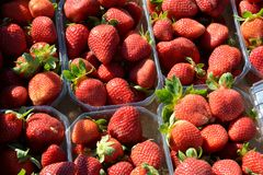 Boxes of strawberries Stock Images