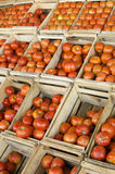 Boxes of Tomatoes Stock Photography
