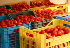 Boxes of tomatoes Stock Images