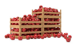 boxes with tomatoes Royalty Free Stock Images
