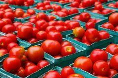 Boxes of tomatoes Stock Image