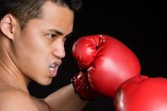 Boxeur asiatique images stock