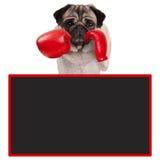 Boxeur de chien de roquet avec les gants de boxe en cuir rouges avec le signe vide de tableau noir de la publicité photographie stock libre de droits