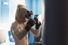 Boxeur de visage de cheval prêt pour la formation de forme physique dans le gymnase Photos libres de droits