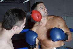 Boxing. Two boxers beat each other on a ring in a gym Royalty Free Stock Image