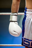 Boxing. Cropped view of man with boxing gloves. Copy space Royalty Free Stock Photography