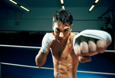Free Boxing Royalty Free Stock Images - 8396769