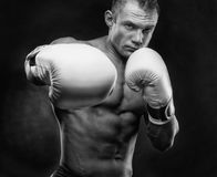 Boxing concept. Boxer with an aggressive look with boxing white gloves before a fight on a black background Royalty Free Stock Image