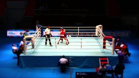 Boxing fight in the ring Time Lapse stock footage
