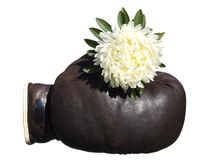 Boxing glove with flower . Royalty Free Stock Photos