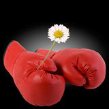 Boxing gloves and a flower. Red boxing gloves and a flower Royalty Free Stock Photo