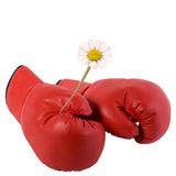 Boxing gloves and a flower. Red boxing gloves and a flower Royalty Free Stock Images