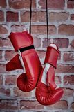 Boxing Gloves. A studio photo of boxing gloves Royalty Free Stock Photo