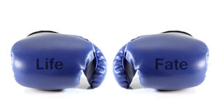 Boxing gloves. Boxing gloves with word life and fate on white background. Life concept Stock Photo