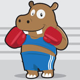 Boxing hippopotamus Royalty Free Stock Photography